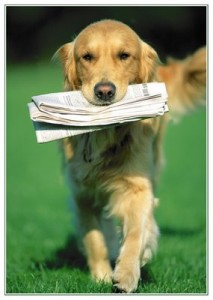 Newspaper and golden retriever