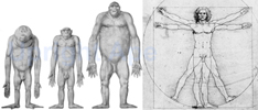 The four Great Hominiforms. Apes by Adolph Schultz - permission of Anthropologische Institut, Zurich. Human by DaVinci