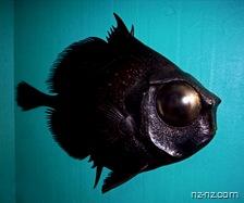 Новая Зеландия, рыба