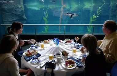 завтрак с пингвинами