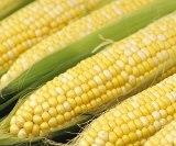 corn: