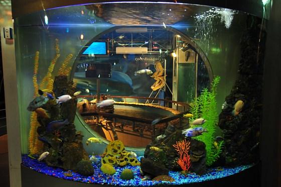 Gelendzhik Oceanarium (Sea Aquarium)  Gelendzhik, Russia photo