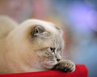 Free Wallpapers - Cat-show