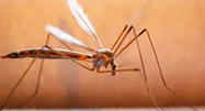 West Nile Virus Positive Mosquito Found in Encino