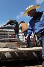 Canada: Join the stampede to Calgary
