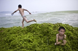 A local boy sits in a pile of algae as his friend runs on top of it at a beach in Qingdao, Shandong province July 6, 2008. China's resort city and venue for the Olympic sailing is on a war footing, with thousands of troops and common volunteers battling to clean the city's biggest ever algae bloom before the Games.  REUTERS/Nir Elias (CHINA) (BEIJING OLYMPICS 2008 PREVIEW)
