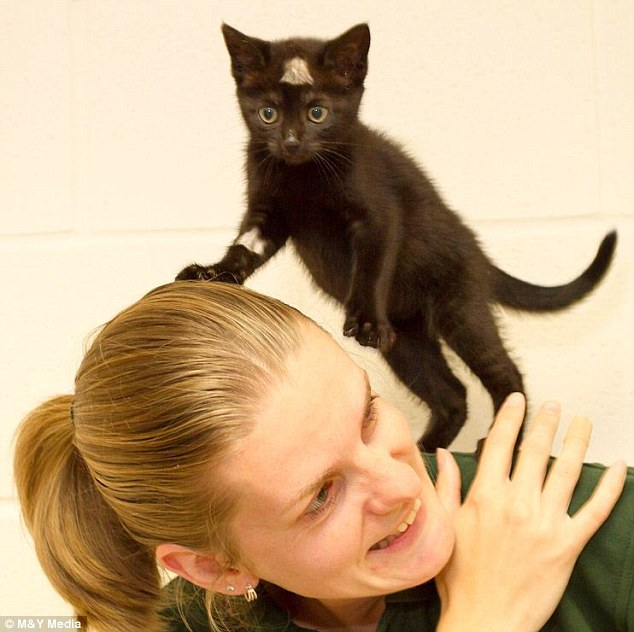 Survivor: Tia is still a playful kitten, as she is seen clambering over staff at the Ringmer animal welfare centre