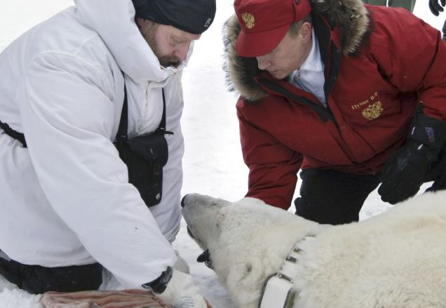 Bear-ing all: Putin helps Polar bear in another of the stunts he is notorious for