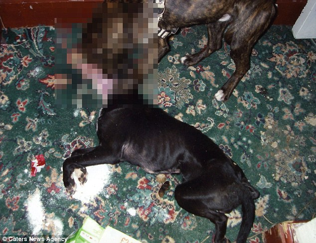 Horrendous: The male dog, Scrappy (right), was so badly emaciated that he ate the body of his mother Ronnie (centre) to try to survive at the home of Katrina Plumridge in Grimsby, Lincolnshire