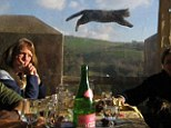 Cat jumps in the photo