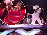 Barking brilliant! The Olate Dogs scoop $1million as puppy act wins America's Got Talent
