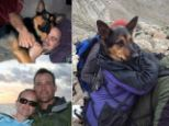 Anthony Ortolani, 29, left Missy on Bierstadt Mountain last month after a storm moved in and the 112-pound dog was unable to walk due to lacerations on her paws.