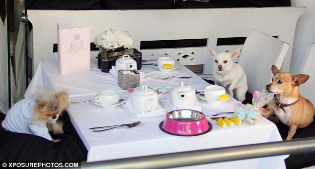 Dog's dinner: Lisa Vanderpump's dog Giggy (L) threw a party for him and his canine companions on Tuesday