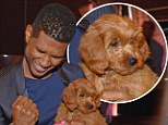 Puppy love: Usher bid $12,000 on an adorable Goldendoodle pooch and won while attending the Pencils of Promise Gala charity event on Thursday