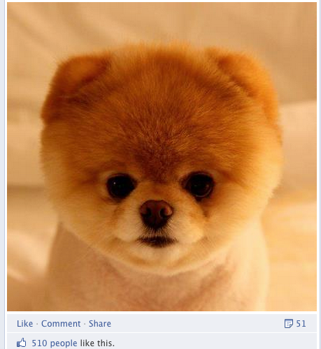 Boo the Dog Facebook's promoted posts