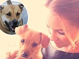 Puppy love: Lauren Conrad adopted a new pooch from an animal shelter and now her Lab mix Chloe has a new playmate