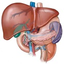 Causes of an Enlarged Liver