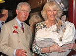 Camilla looked delighted by her encounter with a baby kangaroo in Australia during her Diamond Jubilee tour with husband Prince Charles
