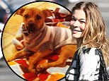 LeAnn Rimes takes in new puppy Eveie after pooch was abandoned in busy traffic