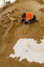 A mammoth find in France provides evidence of a savage demise