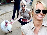 Feed them, don't eat them! Animal rights activist Pamela Anderson gives turkeys a break during the holiday season
