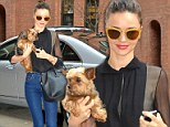 The perfect little accessory! Effortlessly stylish Miranda Kerr totes her tiny dog Frankie as she steps out in yet ANOTHER chic outfit