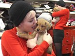Puppy love: Miley Cyrus puckers up to new pet while out buying doggie treats in festive red jumper