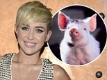 Her very own Babe! Miley Cyrus is given pig as a birthday gift