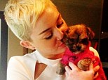 Penny Lane is in her heart! Miley Cyrus shared pictures of her newly-adopted puppy on her Twitter page