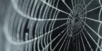 Spider Silk Inspires Beautiful Music