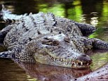 Terror: Reports suggest frantic adults within the group tried to free the boy from the mouth of the crocodile. (File picture)