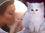 RIP Mercy: Kim Kardashian reportedly blames breeder for four-month-old kitten's viral death