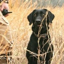 Dog Remote Training Collars Reviews