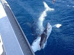 Chomp: The Kiwi fisherman took the spectacular photo, pictured, on December 28