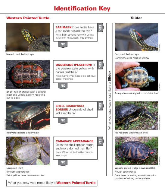 turtle-idguide_web_copy.jpg