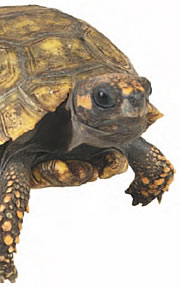 Image of tortoise