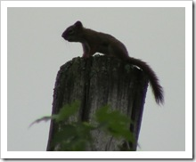 squirrel not happy with me cutting down trees