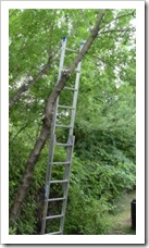 ladder on the tree