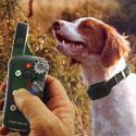 Dog Training Collars / Shock Collars