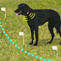buy  Pet Containment Systems, Wireless Dog Fences, & Extra Radio Collars