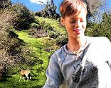 The singer played wildlife photographer as she snapped pictures of wild deer enjoying the morning sunlight.