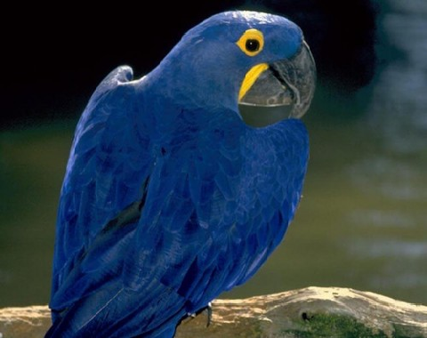 Birds Life The most common diseases in parrots