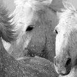 الحصان Horse