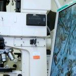 PageLines- petrography-training.jpg