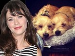 'Apples of my eye!' Zooey Deschanel introduces her adorable new rescue pups Zelda and Dot to the world