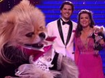 He's so fetch-ing! Lisa Vanderpump's pet pooch Giggy steals her Dancing With The Stars spotlight as he sports a doggy tuxedo