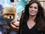 Easter Giggy! Lisa Vanderpump's costumed Pomeranian upstages all others at DWTS rehearsal