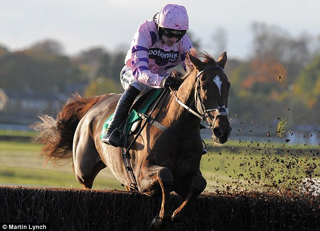 One to watch: The Paul Nicholls-trained Silviniaco Conti will be tough to beat in the Betfred Bowl Chase