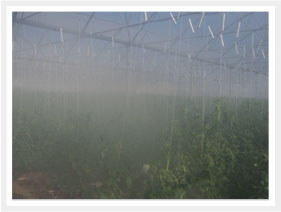 greenhouse misting & fogging