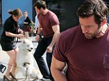 Hugh to the rescue! Jackman is forced to intervene when his pet pooch Dali gets in a comical tangle with a dog several times his size